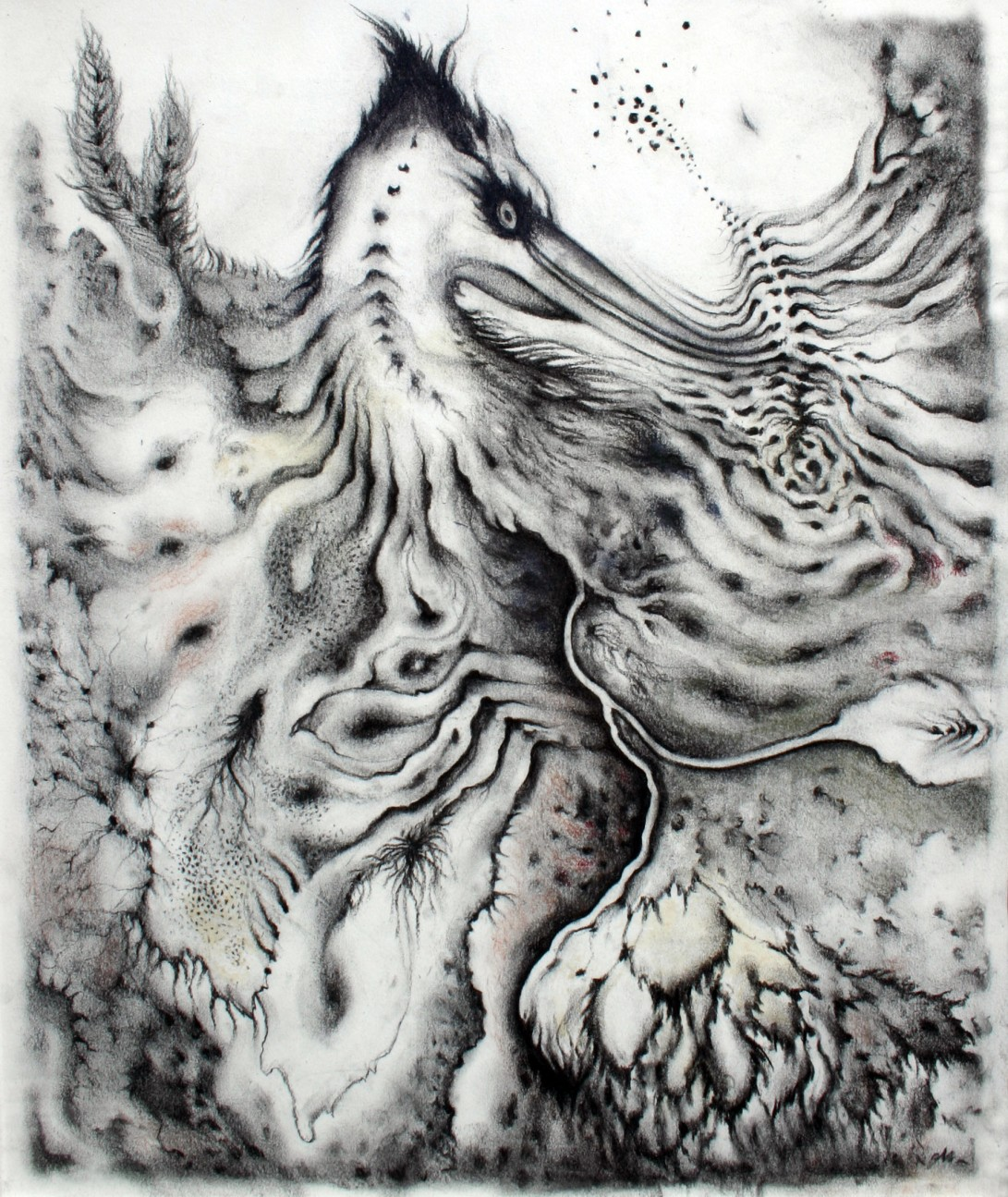 Bird of Pray, 2011. (colored) charcoal on paper